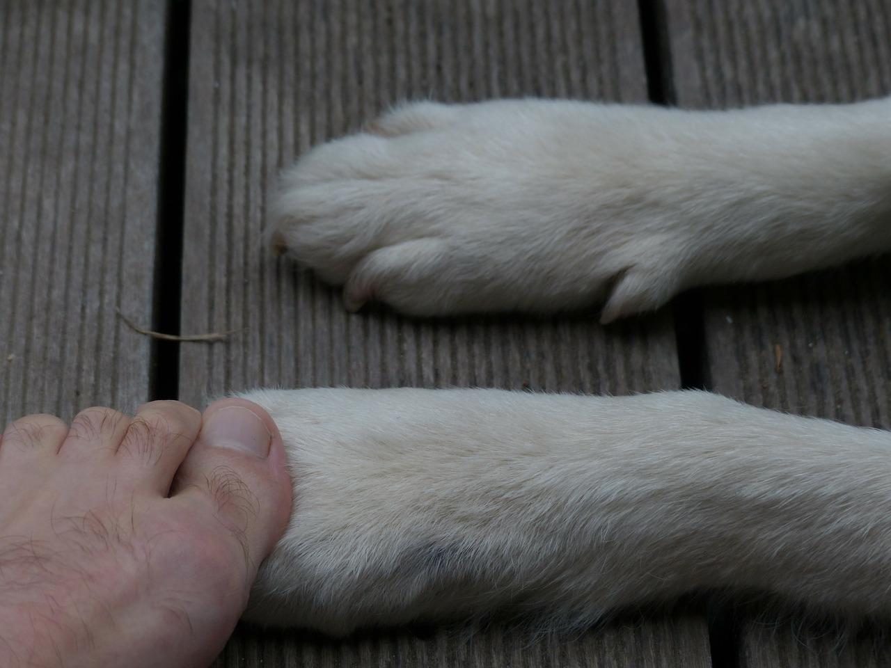zampe di cane
